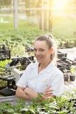 Kobieta agronom z krzyżować rękami w greenhose Zdjęcie Royalty Free