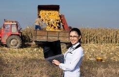 Kobieta agronom z laptopem w kukurydzanym polu Fotografia Stock