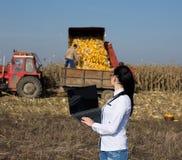 Kobieta agronom z laptopem w kukurydzanym polu Zdjęcia Stock