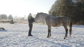 Kobieta bawić się z koniem zbiory