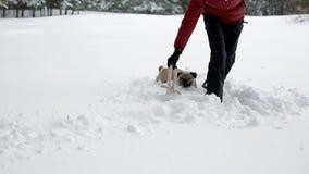 Kobieta bawić się z zabawką i jej mops w głębokim śniegu zdjęcie wideo