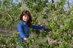 Kobieta blisko kwiatonośnej jabłoni zdjęcie royalty free
