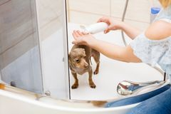 Kobieta bra? pryszni? jej psa zdjęcia stock
