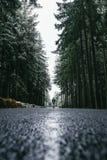 Kobieta chodzi przez lasu w wintertime Samotna kobieta iść w zimnym dniu obraz stock