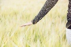 Kobieta chodzi w pszenicznym polu i dotyka pszenicznych cobs Zdjęcia Stock