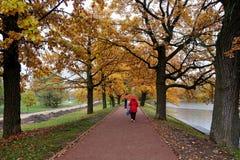 Kobieta chodzi wzdłuż alei w parku Obraz Royalty Free