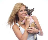 Kobieta chwyt w ręki chihuahua małym psie lub szczeniaku Fotografia Royalty Free