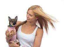 Kobieta chwyt w ręki chihuahua małym psie lub szczeniaku Obrazy Royalty Free