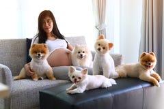 Kobieta ciężarna i pomeranian psi śliczni zwierzęta domowe w żywym pokoju Fotografia Stock