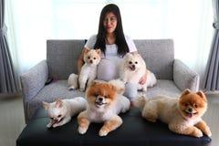 Kobieta ciężarna i pomeranian psi śliczni zwierzęta domowe w żywym pokoju Zdjęcie Stock