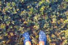 Kobieta cieki na trawa odgórnego widoku cyfrowej ilustraci Lato gazonu spacer Słonecznego dnia rocznika plenerowy plakat zdjęcie stock