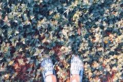 Kobieta cieki na trawa odgórnego widoku cyfrowej ilustraci Spacer na lato gazonie Słonecznego dnia plenerowy zatarty plakat zdjęcia stock