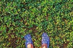Kobieta cieki na zielonej trawy odgórnego widoku cyfrowej ilustraci Lato gazonu spacer Słonecznego dnia plenerowy plakat fotografia stock