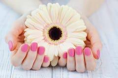 Kobieta cupped ręki z piękne menchie matującym manicure'em zdjęcie royalty free