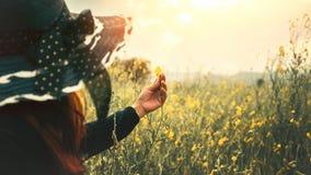 Kobieta dotyka żółtego kwiatu Obrazy Royalty Free
