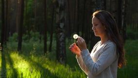 Kobieta dotyka palce kwitną na dandelion ziarna głowie, ciosie i floret komarnicie, daleko od zbiory