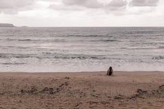 Kobieta Gapi się przy morzem Zdjęcia Royalty Free