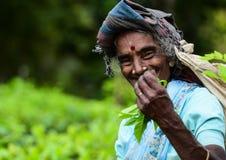 Kobieta herbacianego ogródu pracowników junactwa herbaciani liście obraz stock