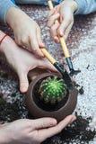 Kobieta i chłopiec repotting Pachypodium kaktusa nowy garnek obrazy stock