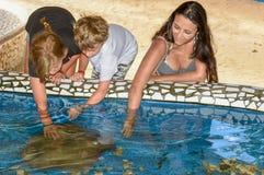 Kobieta i dzieci pieści traken ryby na projekta Tamar zbiorniku przy Praia robimy forte w Brazylia zdjęcie royalty free