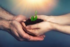Kobieta i męskie ręki trzymamy żyzną ziemię z małą flancą Pojęcie ochrona środowiska, organicznie rolnictwo, i zdjęcia royalty free