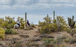 Kobieta Jeździeccy konie Na Pustynnym śladzie W Arizona obraz stock