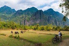 Kobieta jeździecki rower górski na drodze gruntowej w scenicznym krajobrazie wokoło Vang Vieng backpacker podróży miejsce przezna zdjęcie stock
