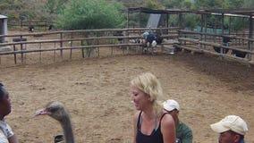 Kobieta jeździecki struś zbiory