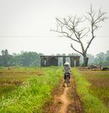 Kobieta jechać na rowerze na wiejskiej drodze z ryżu polem w Phu Tho, Wietnam Zdjęcie Royalty Free