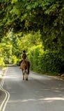 Kobieta jedzie konia na ulicznym, wiejskim miasteczku, zielone rośliny Fotografia Stock