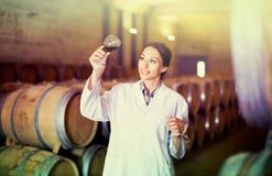 Kobieta jest ubranym żakiet trzyma szkło wino na wytwórnii win Obrazy Stock