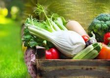 Kobieta jest ubranym rękawiczki z świeżymi warzywami w pudełku w jej Han zdjęcia stock