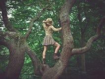 Kobieta jest ubranym safari kapeluszowego wspinaczkowego drzewa Fotografia Royalty Free