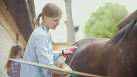 Kobieta koń szczotkuje ogiera na słonecznym dniu na zwierzęcym gospodarstwie rolnym zdjęcie wideo