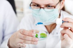 Kobieta naukowiec trzyma próbnej tubki z rośliną Fotografia Stock