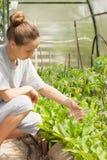 Kobieta nawozi rośliny od szklanej żarówki obrazy royalty free