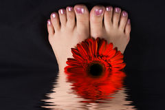 kobieta nożna gerbera czerwieni Zdjęcie Royalty Free