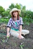 Kobieta odchwaszcza łóżka z flancy zucchini w ogródzie Zdjęcie Stock