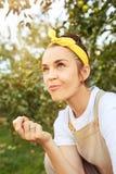 Kobieta podczas zrywania jabłka w ogródzie outdoors Zdjęcie Royalty Free