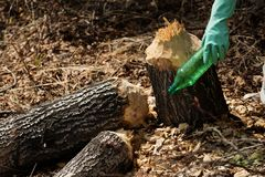 Kobieta podnosi w g?r? usypu na brudnym lesie obrazy royalty free