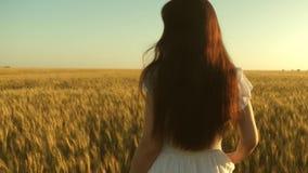 Kobieta podróżuje pole z złotą banatką piękny dziewczyny odprowadzenie na polu dojrzała banatka swobodny ruch organicznie banatka zdjęcie wideo