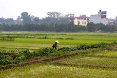 Kobieta podziału między ryżowymi polami skrzyżowanie fotografia royalty free
