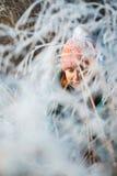 Kobieta portret w zima krajobrazie przy zmierzchem Fotografia Royalty Free
