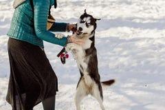 Kobieta próbuje być ubranym metalu kołnierz na jej psie zdjęcie stock