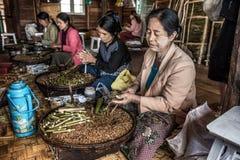 Kobieta pracowników ręcznie produkt spożywczy cygara w Myanmar zdjęcie royalty free