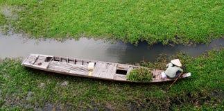 Kobieta pracuje na łodzi w Mekong delcie, Wietnam obraz stock