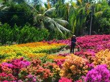 Kobieta pracuje na kwiatu polu w Mekong delcie, Wietnam Fotografia Stock