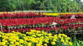 Kobieta pracuje na kwiatu polu w Mekong delcie, Wietnam zdjęcia stock