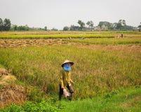 Kobieta pracuje na polu przy Mong Duong miasteczkiem w Hagiang, Wietnam zdjęcia royalty free