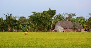 Kobieta pracuje na ryżu polu w Vinh Długo, południowy Wietnam obrazy stock